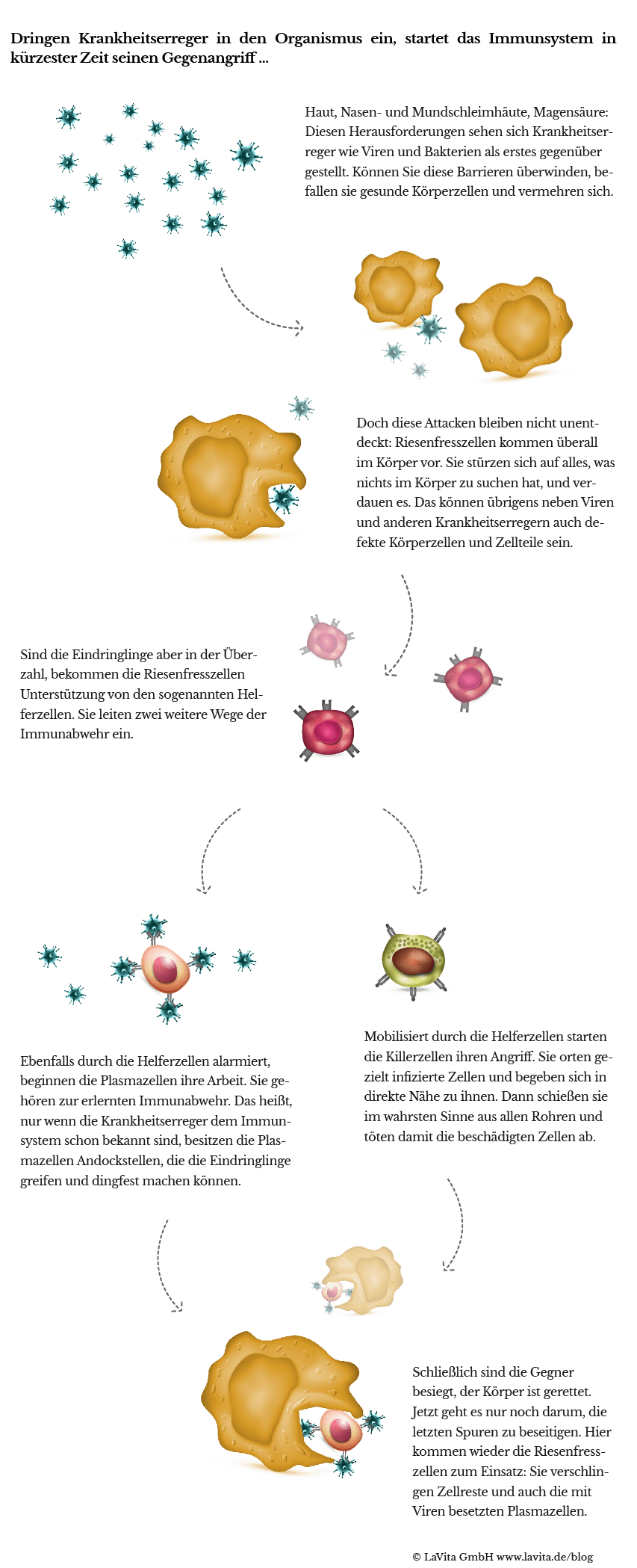 20151026_Immunsystem