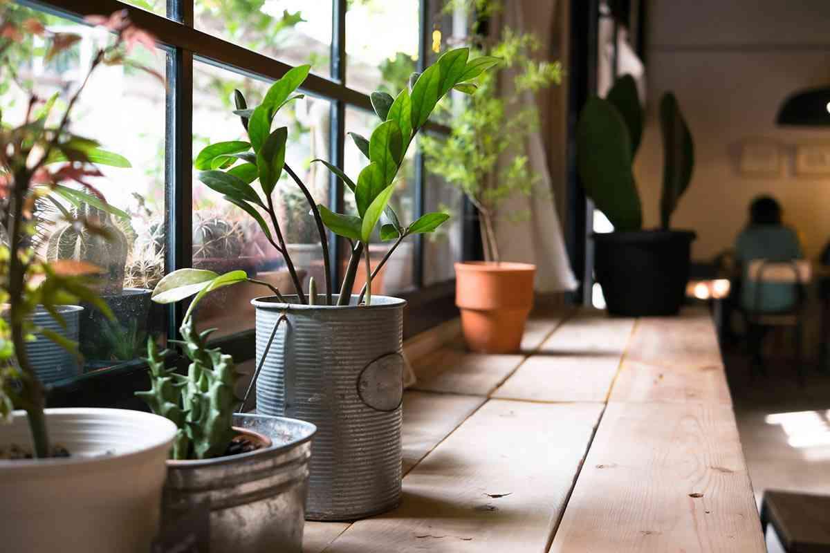 Zimmerpflanzen im Schlafzimmer
