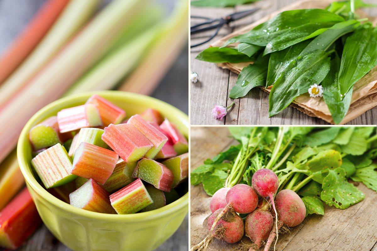 Rhabarber, Bärlauch, Radischen - so schmeckt der Frühling!