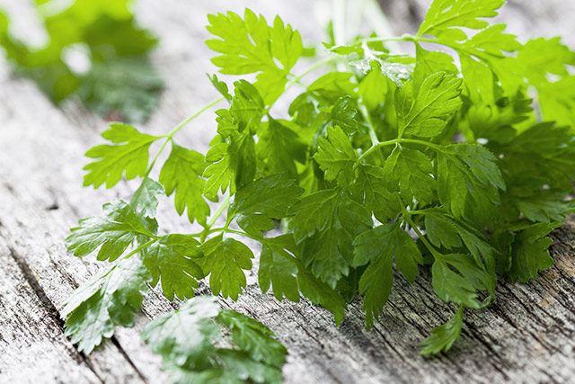 Kerbel (auch Gartenkerbel, Suppenkraut oder Körbel genannt) kommt im März frisch auf den Markt und ist bis Ende August erhältlich.