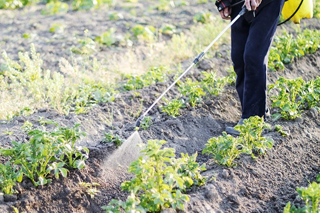 Pestizide giftig