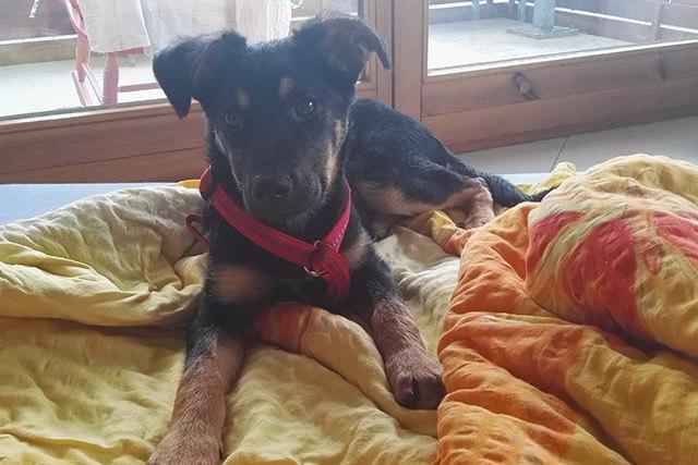 LaVita für Hunde: Dieser Welpe wuchs mit LaVita auf.