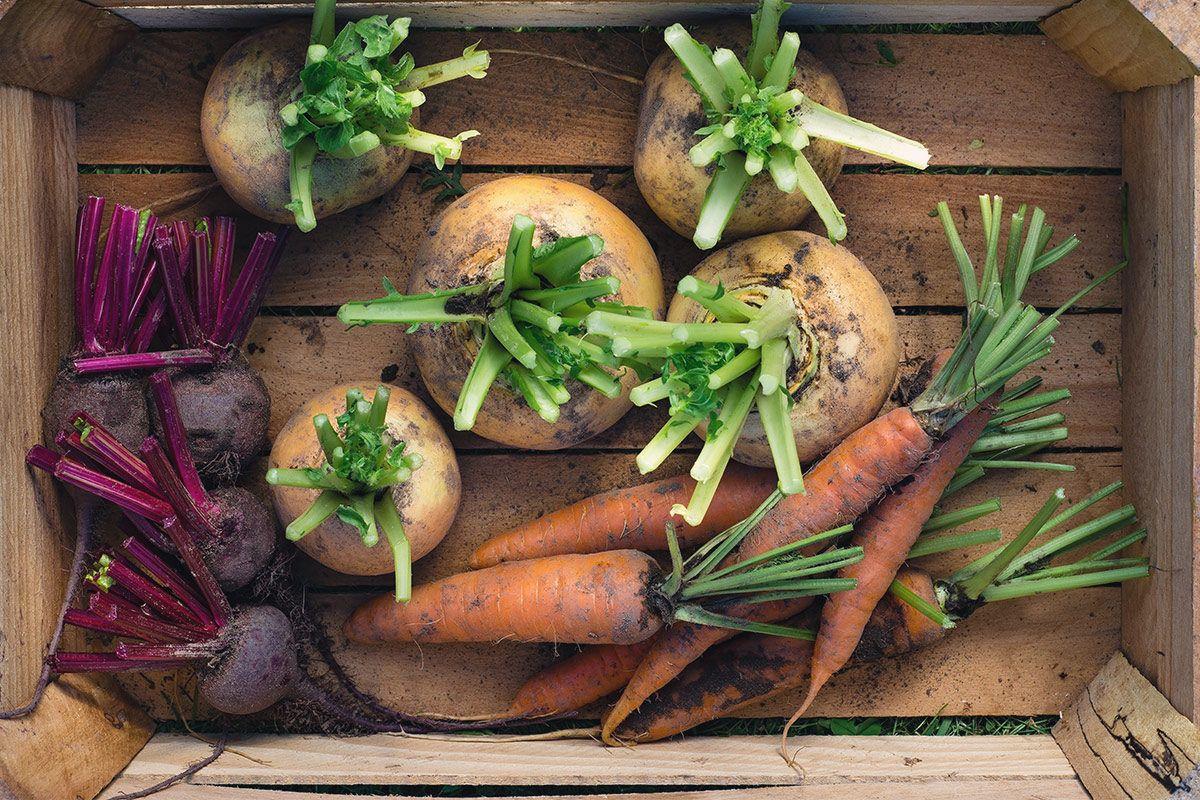 Tipps, damit Sie Gemüse richtig lagern
