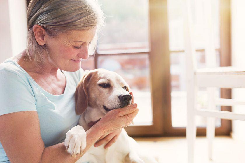 LaVita für Ihren Hund: Natürliche Vitamine unterstützen Hund und Katze.