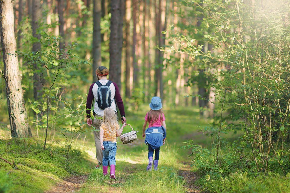 Der Wald bietet uns viele gesunde und leckere Beeren, Pilze und Kräuter.