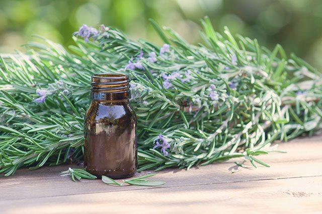Rosmarin und ätherisches Rosmarinöl gelten als natürliche Wachmacher.