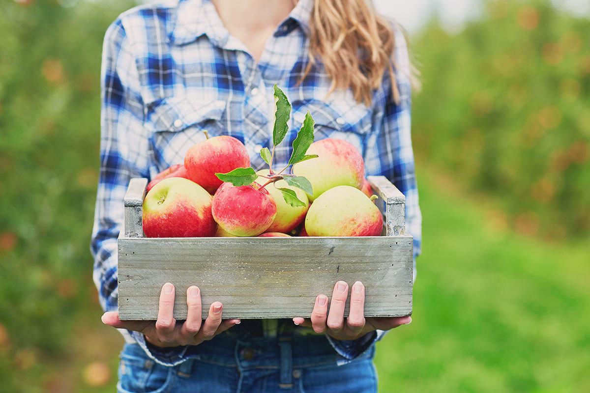 Eine Kreuzallergie tritt häufig im Frühjahr auf. Nicht selten ist die Birkenpollen-Apfel-Kreuzallergie.